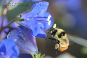 the bee 3