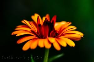 opening orange