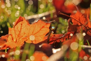 leaves in the dew