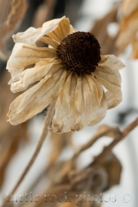 winter flower 4