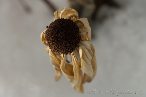 winter flower 3