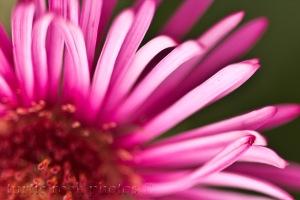 pink 1