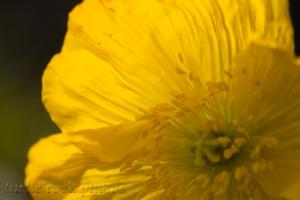 bright yellow 2