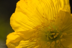 bright yellow 2
