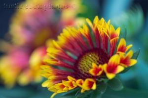 arizona sun blankets 1