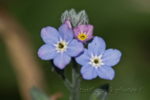 little blue and purple 1