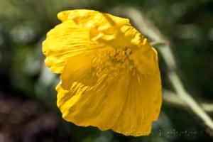 yellow in the sun